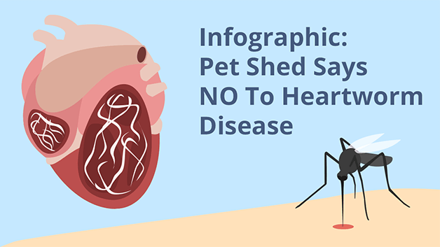 Infographic: Pet Shed Says NO To Heartworm Disease
