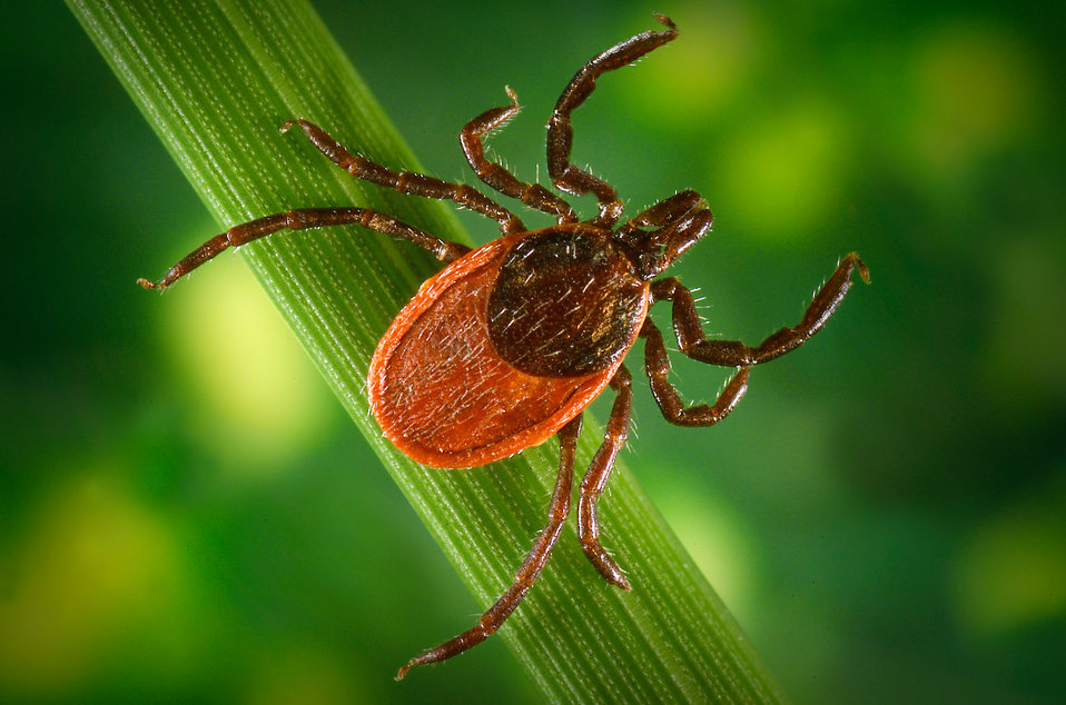 How to Identify & Avoid Lyme Disease Infographic