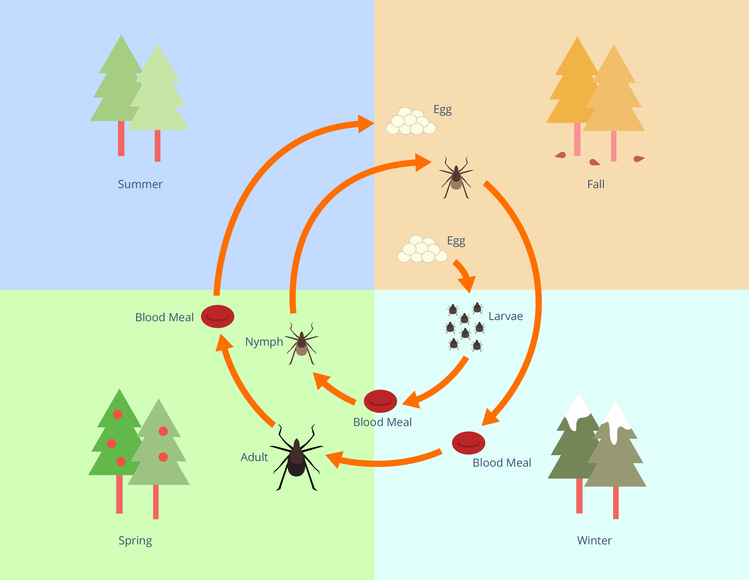 Lyme Disease Graphic 1