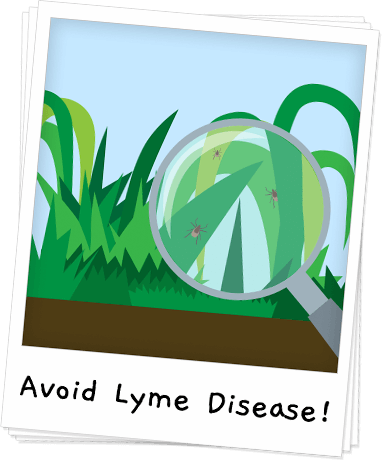 How to Identify & Avoid Lyme Disease Banner