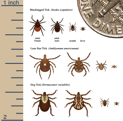 Tick Size Graphic