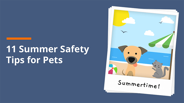 11 Summer Safety Tips for Pets