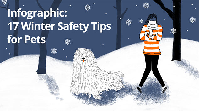 Infographic: Winter Safety Tips for Pets