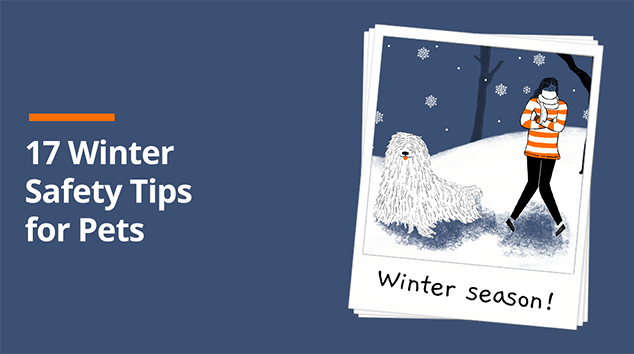 Winter Safety Tips for Pets