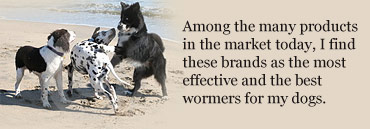 healthydogs.jpg