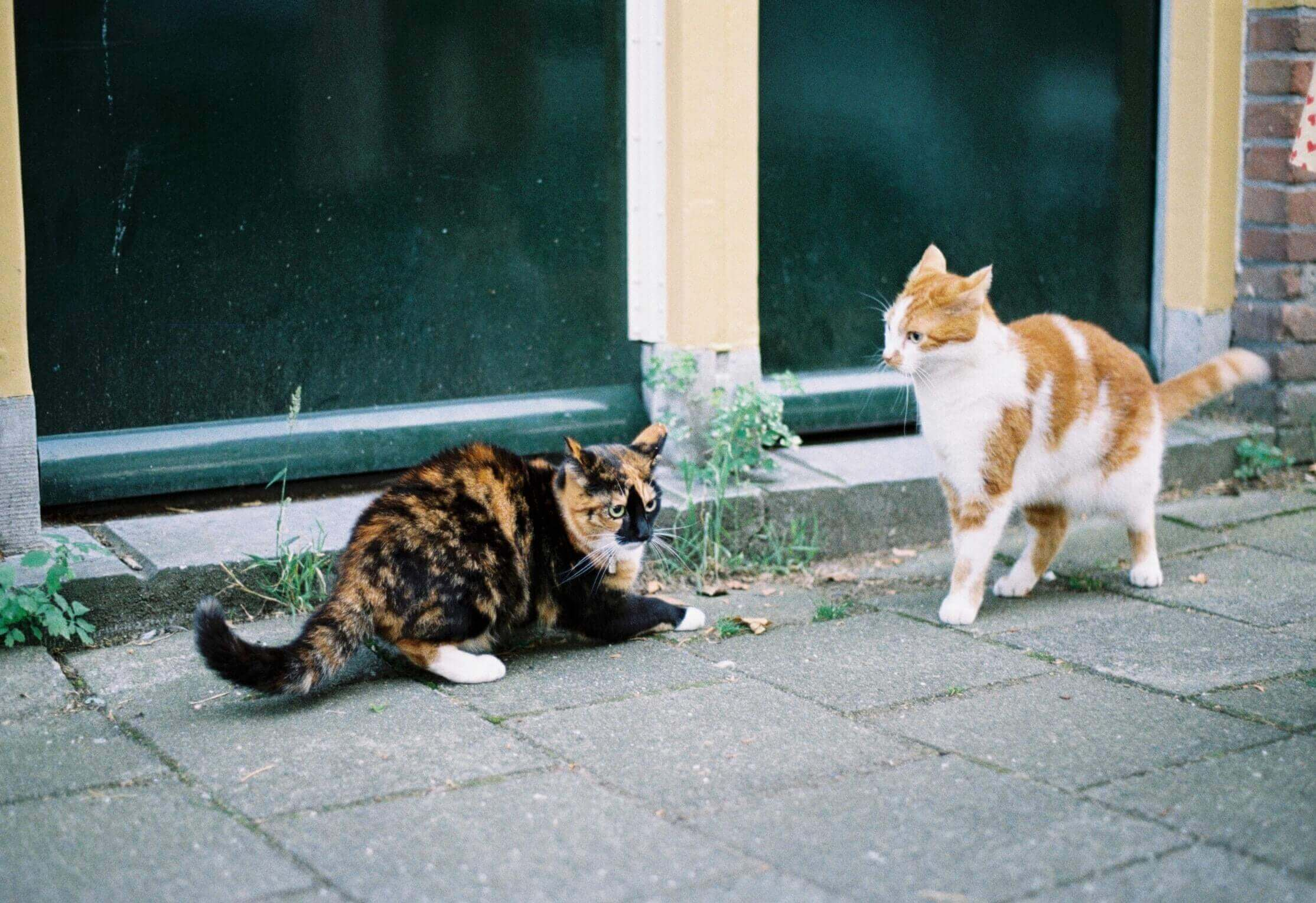 Cats fighting at the streets