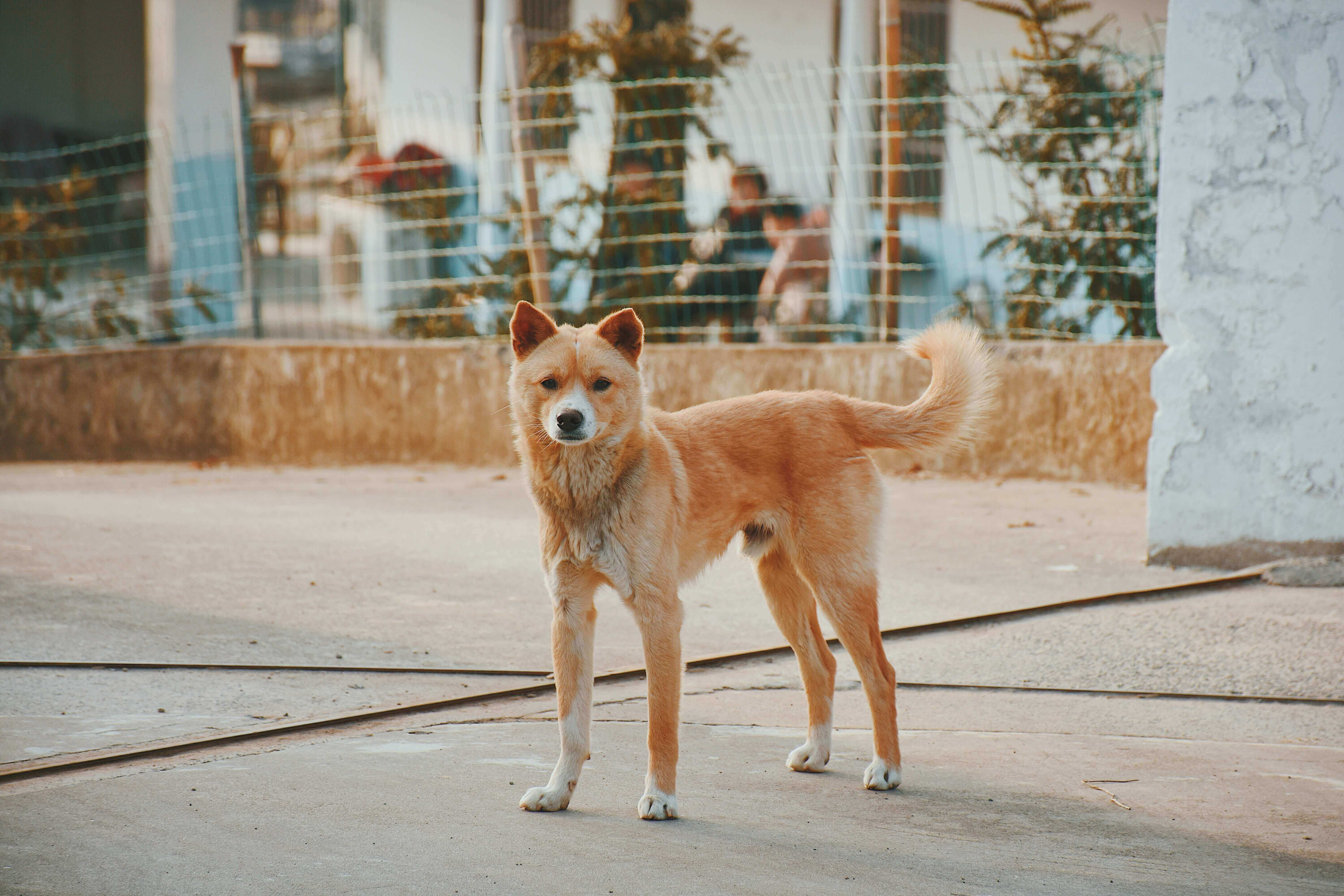 Dogs standing on the street