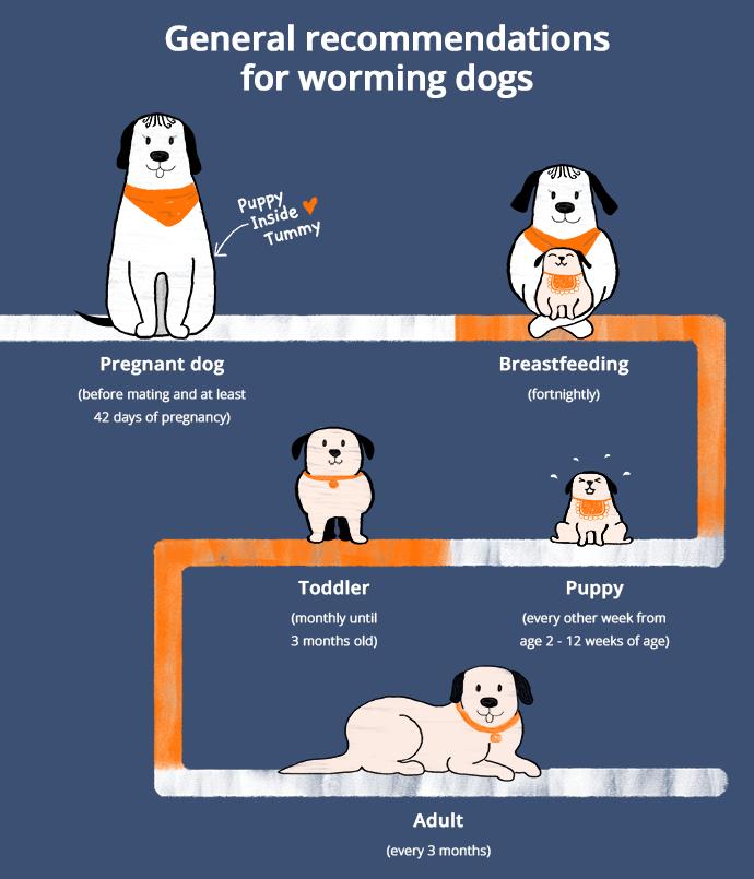 How should I worm my dog?