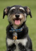 Lost pet identification